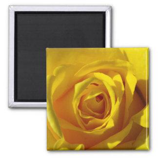 Yellow Rose Macro 2 Inch Square Magnet