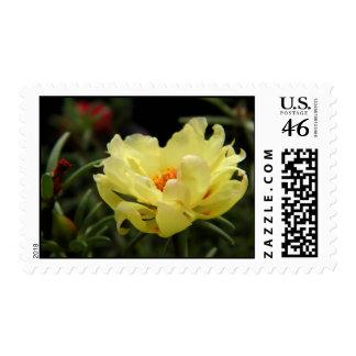 Yellow Rose Moss Postage