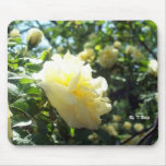 Yellow Rose, Mouse Pad