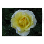 Yellow Rose note card