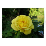 Yellow rose notecards cards
