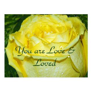 Yellow Rose of Love_ Postcard