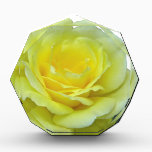 """YELLOW ROSE, OF TEXAS? AWARD<br><div class=""""desc"""">This beautiful rose bloomed in my garden.</div>"""