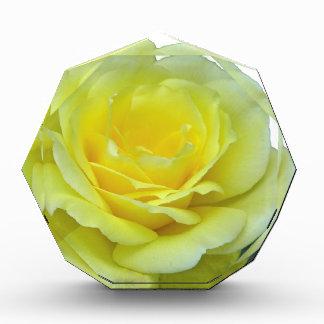 YELLOW ROSE, OF TEXAS? AWARD