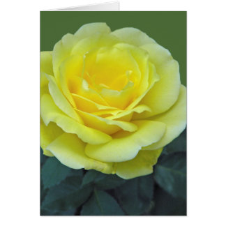 YELLOW ROSE, OF TEXAS? CARD