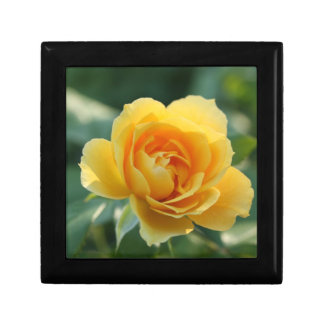 Yellow Rose of Texas Gift Box