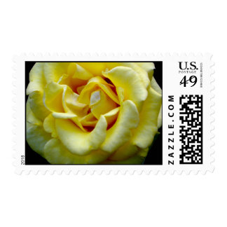 Yellow Rose of Texas Postage Stamps