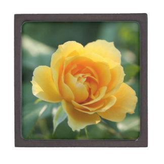 Yellow Rose of Texas Premium Jewelry Boxes
