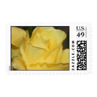 YELLOW ROSE OHOTO POSTAGE STAMPS