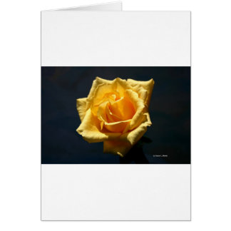 Yellow Rose on a dark background Greeting Card