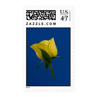 Yellow Rose on Dark Blue Postage