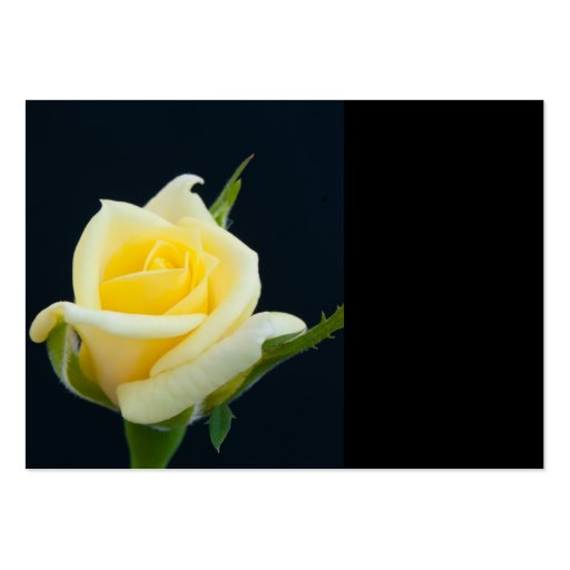 Yellow rose on the black background large business card