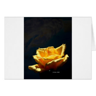 Yellow Rose on very dark green background Greeting Card