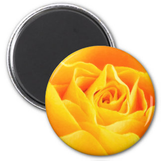 Yellow rose painted magnet