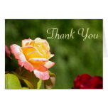 yellow rose photo greeting cards