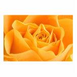Yellow Rose Photo Sculpture