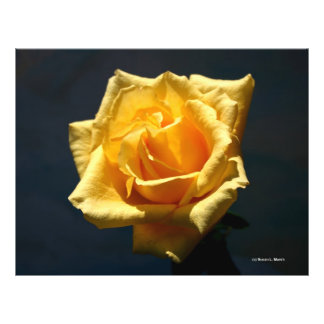 Yellow Rose photograph against dark background Full Color Flyer