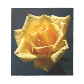 Yellow Rose photograph against dark background Memo Note Pads