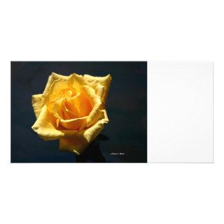 Yellow Rose photograph against dark background Custom Photo Card