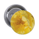 Yellow rose pinback buttons