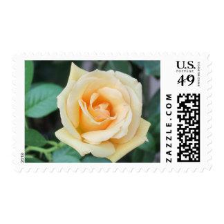 yellow rose postage