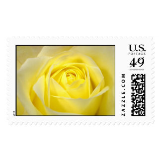 Yellow Rose Postage
