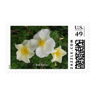 Yellow Rose Postage Stamp