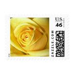 yellow rose postage stamp