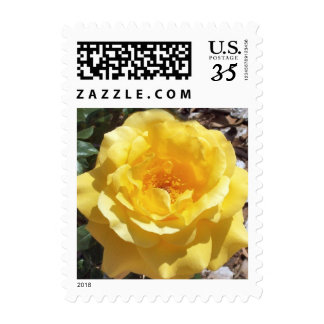 Yellow Rose Postage Stamps