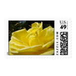 Yellow Rose Postage Stamps Roses Garden