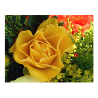 Yellow Rose | Postcard