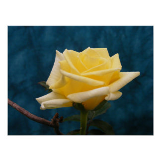 Yellow Rose Posters