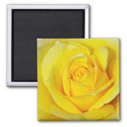 Yellow rose print magnet