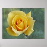 Yellow rose print or poster