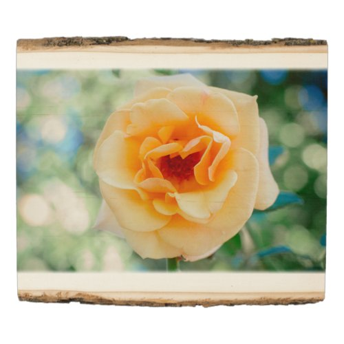 Yellow Rose Rustic Art Print on Wood
