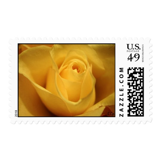 Yellow Rose, S Cyr Postage