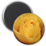 Yellow Rose, S Cyr Refrigerator Magnet