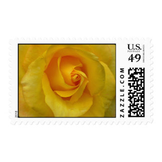 Yellow Rose Stamps Sunny Flowers Postage Stamps