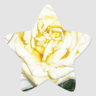 Yellow Rose Star Sticker
