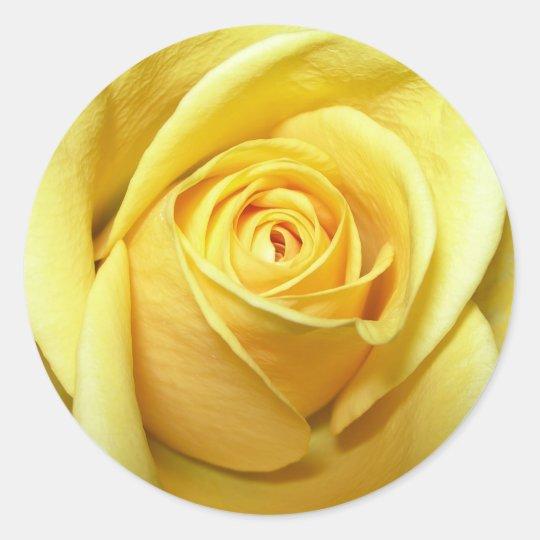 yellow rose sticker