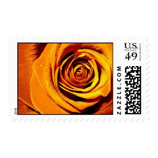 Yellow Rose U.S. Postage Stamp