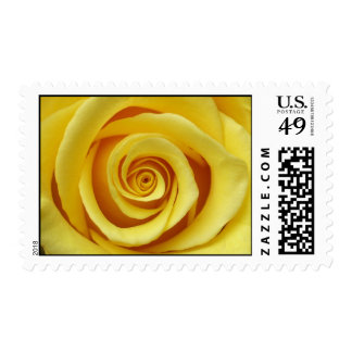 Yellow Rose U.S. Postage Stamp