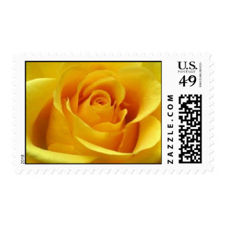 Yellow Rose U.S. Postage Stamps