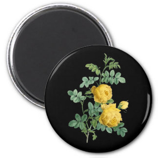 Yellow Rose vintage botanical illustration 2 Inch Round Magnet