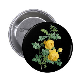 Yellow Rose vintage botanical illustration Button