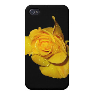 Yellow Rose with Dew Drops Cover For iPhone 4