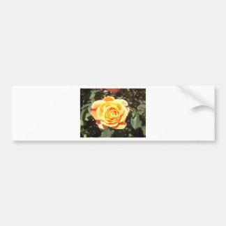 Yellow Rose with Orange Tinge Bumper Sticker