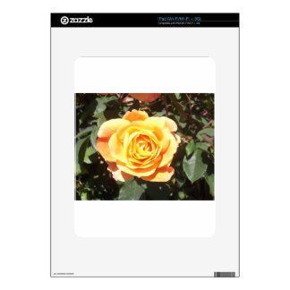 Yellow Rose with Orange Tinge Skins For iPad