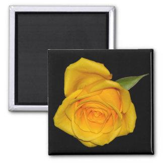 Yellow Rosebud 2 Inch Square Magnet