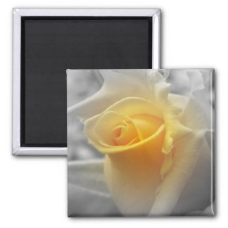 Yellow Rosebud Grayscale 2 Inch Square Magnet
